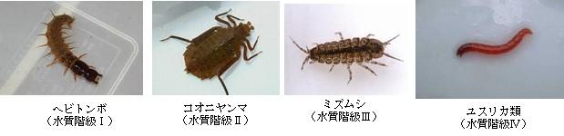 指標生物の例の画像